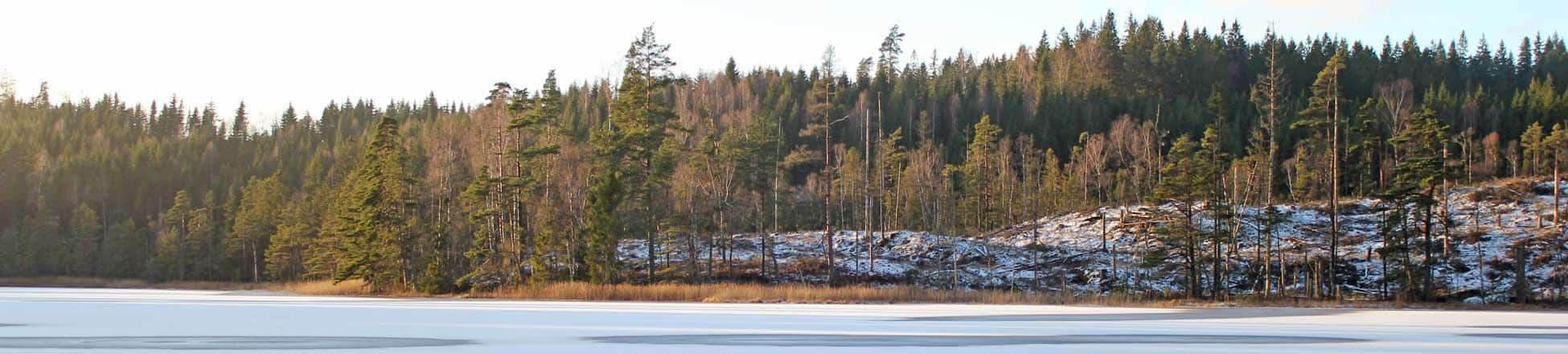 Winterbeeld Zweden