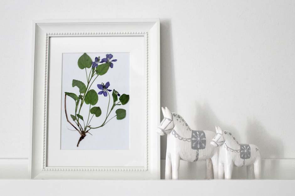 Herbarium: Maarts viooltje