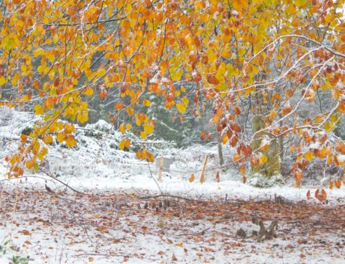 Herfst en winter geven elkaar de hand